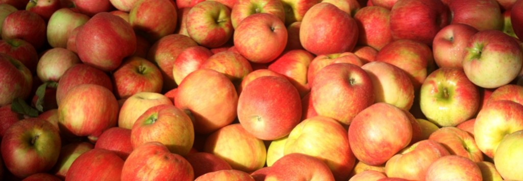 Wilkes County Apples